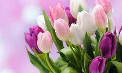Дорогі колегині! Вітаємо вас зі святом весни!